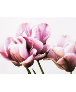Koopman Prostírání Tulipán 28 x 43 cm
